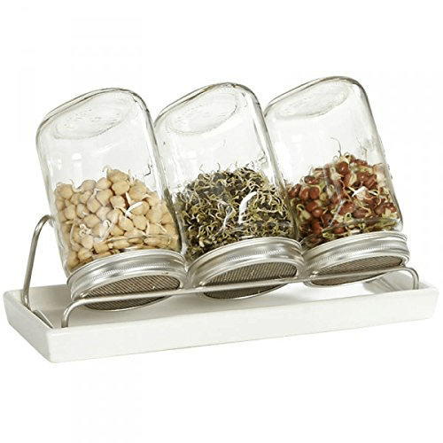 glass sprouting jars