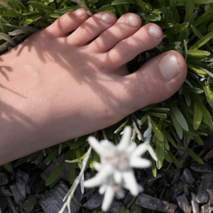 Grounding, Earthing & EMF Reduction